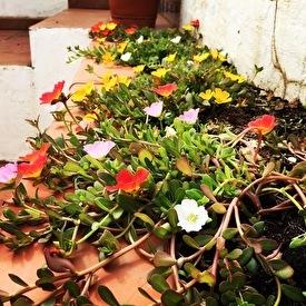 flowers inner courtyard